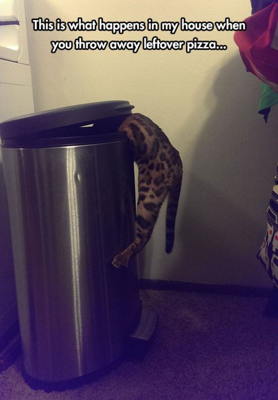 Cat - This is what happens in my house when you throw away leftover pizza.