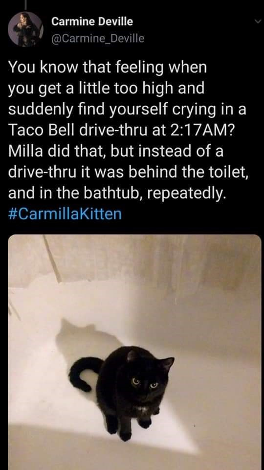 Black cat - Carmine Deville @Carmine_Deville You know that feeling when you get a little too high and suddenly find yourself crying in a Taco Bell drive-thru at 2:17AM? Milla did that, but instead of a drive-thru it was behind the toilet, and in the bathtub, repeatedly. #CarmillaKitten