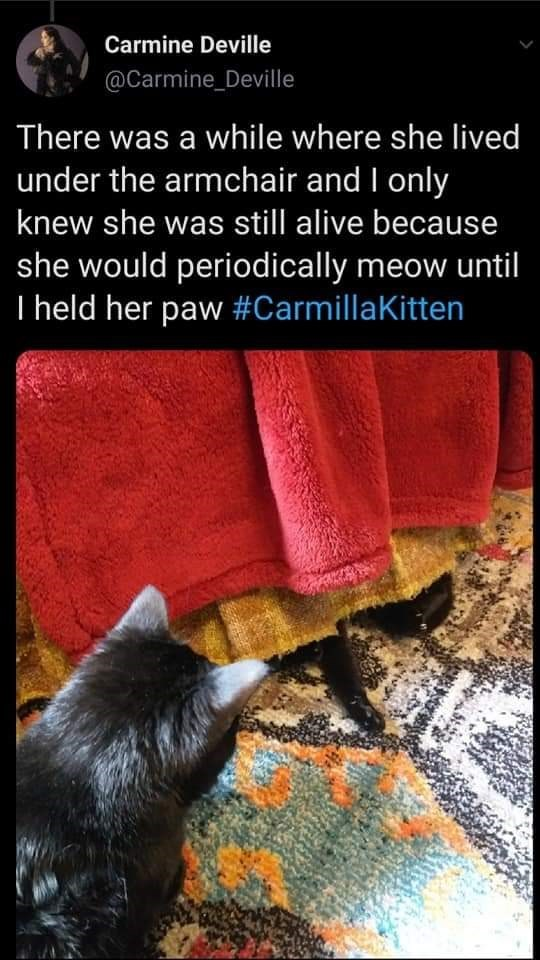 Text - Carmine Deville @Carmine_Deville There was a while where she lived under the armchair and I only knew she was still alive because she would periodically meow until I held her paw #CarmillaKitten