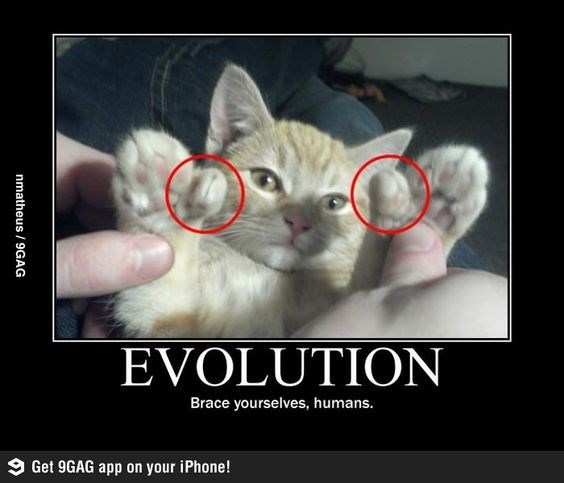 Cat - EVOLUTION Brace yourselves, humans. 9 Get 9GAG app on your iPhone! nmatheus / 9GAG