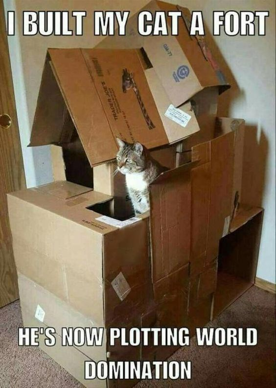 Furniture - I BUILT MY CAT A FORT HE'S NOW PLOTTING WORLD DOMINATION C4-77 38 12N aor u 74795A TRADE