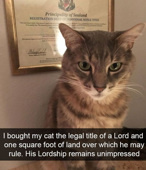 Cat - Principality of Sealand REGISTRATION DEED OF INDIVIDUAL NOBLE TITLE The Indvl N T s d The Pripy lew T has be w Thi rdrtfase W There j enly I bought my cat the legal title of a Lord and one square foot of land over which he may rule. His Lordship remains unimpressed