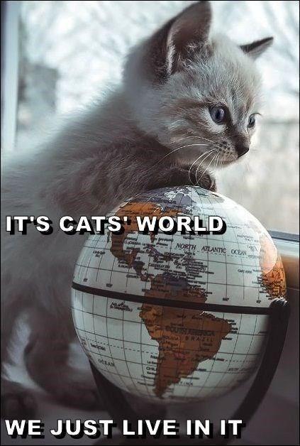 Cat - IT'S CATS WORLD NORTH ATLANTIC OCEAN DRAZIL WE JUST LIVE IN IT