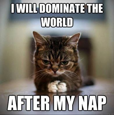Cat - I WILL DOMINATE THE WORLD AFTER MY NAP