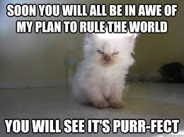 Cat - SOON YOU WILL ALL BE IN AWE OF MY PLAN TO RULETHE WORLD YOU WILL SEE IT'S PURR-FECT