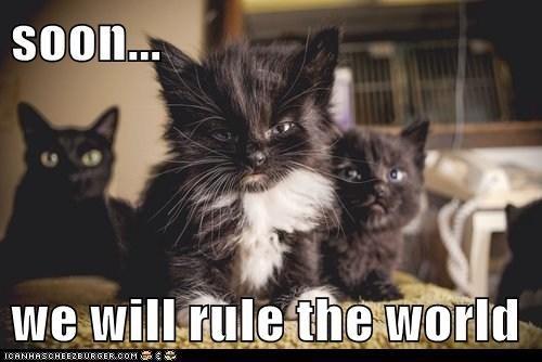 Cat - Soon.. we will rule the world ICANHASCHEEZBURGER.COM E