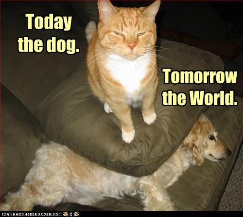 Cat - Today the dog. Tomorrow the World. ICANHASCHEEZBURGER.COM E