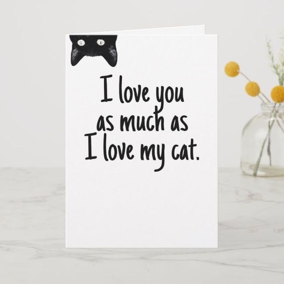 Text - I love you as much as I love my cat.