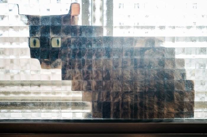 cats pixel pixels funny