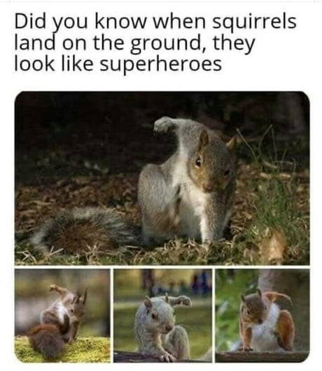 Did you know when squirrels land on the ground they look like superheroes four pics of squirrels in the wild with one front paw on the ground ans one in the air as if they just landed from the air