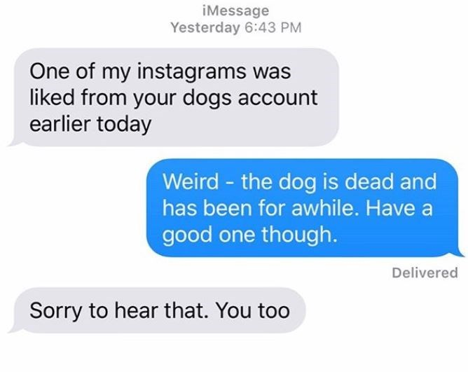 Text - iMessage Yesterday 6:43 PM One of my instagrams was liked from your dogs account earlier today Weird - the dog is dead and has been for awhile. Have a good one though. Delivered Sorry to hear that. You too