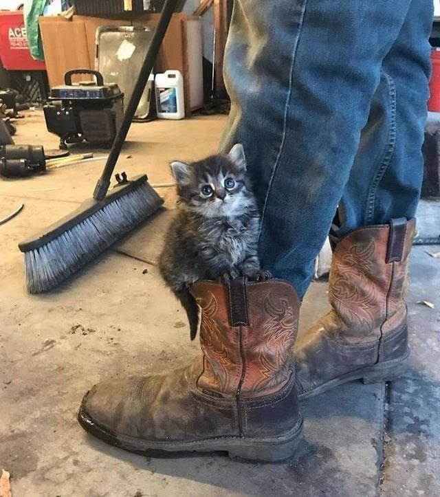 Cat - ACE