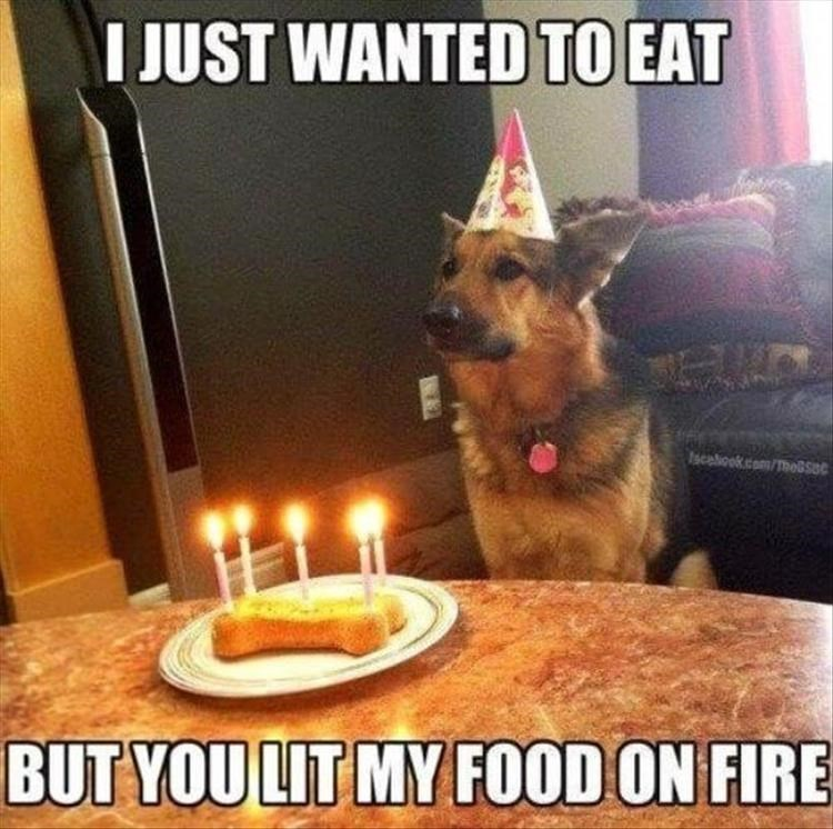 Dog - I JUST WANTED TO EAT Iscebook.com/ThoBSOC BUT YOU LIT MY FOOD ON FIRE
