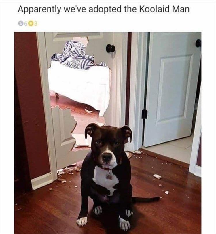 Dog - Apparently we've adopted the Koolaid Man 9603