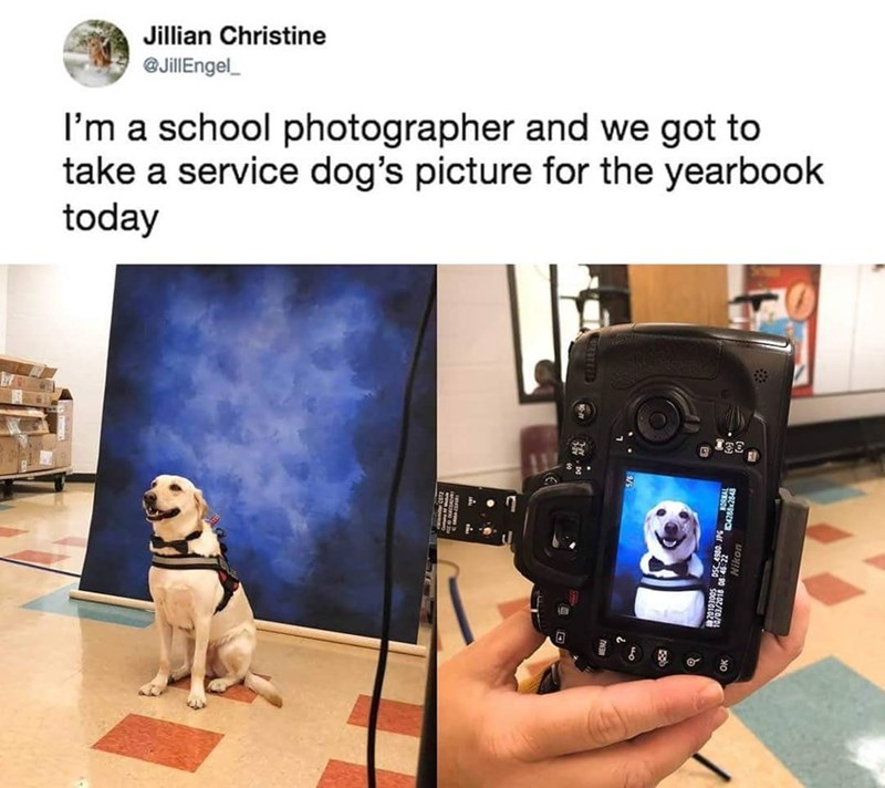 Cameras & optics - Jillian Christine @JillEngel_ I'm a school photographer and we got to take a service dog's picture for the yearbook today