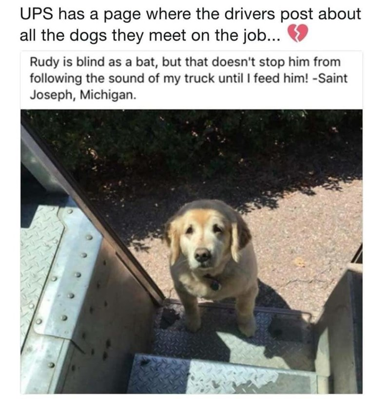 Dog - UPS has a page where the drivers post about all the dogs they meet on the job... Rudy is blind as a bat, but that doesn't stop him from following the sound of my truck until I feed him! -Saint Joseph, Michigan.