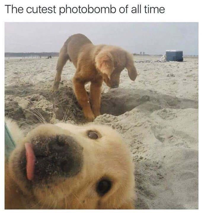 Dog - The cutest photobomb of all time