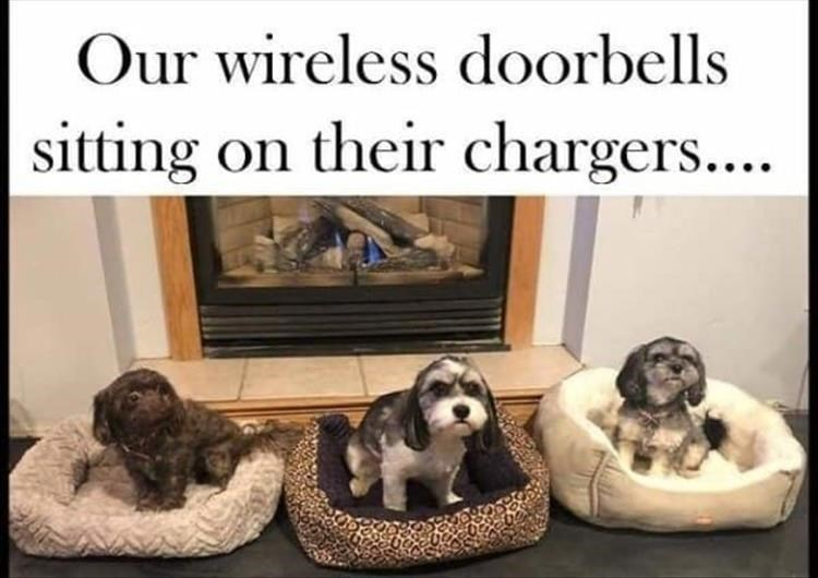 Dog breed - Our wireless doorbells sitting on their chargers...