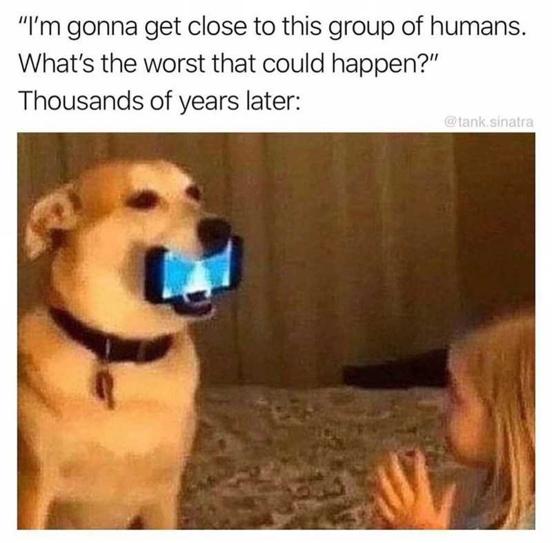 """Dog breed - """"I'm gonna get close to this group of humans. What's the worst that could happen?"""" Thousands of years later: @tank.sinatra"""