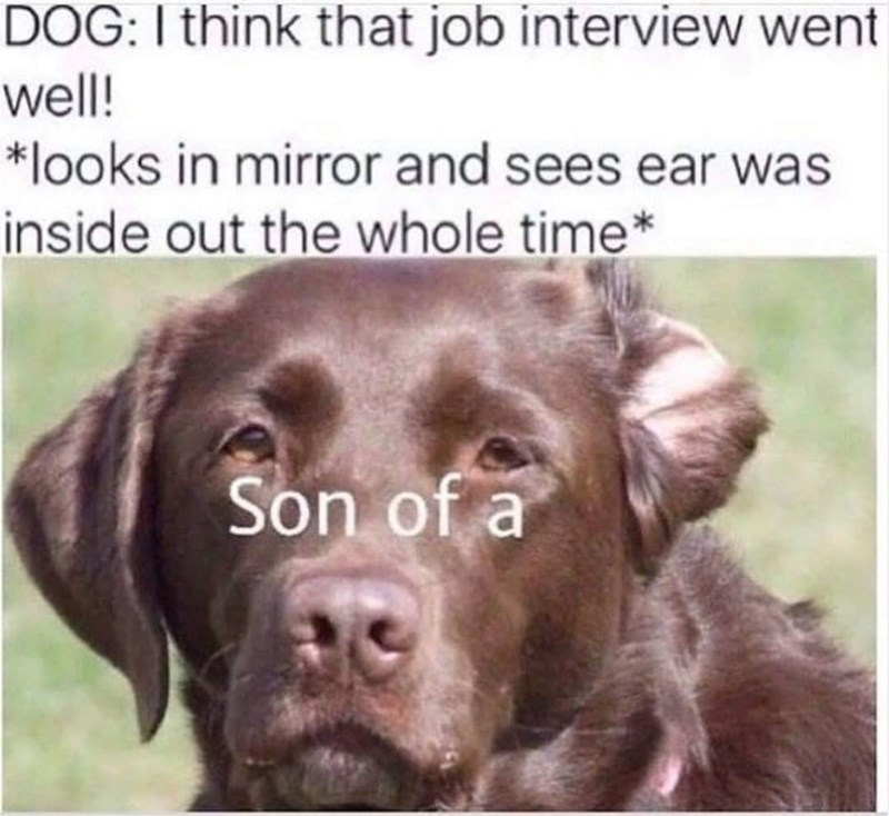 Dog - DOG:I think that job interview went well! *looks in mirror and sees ear was inside out the whole time* Son of a