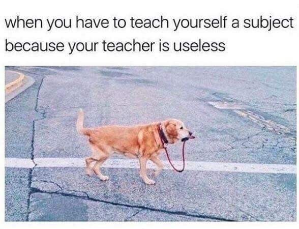 Dog - when you have to teach yourself a subject because your teacher is useless