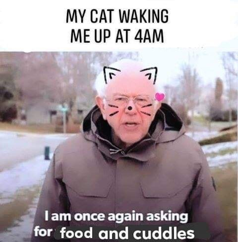 Internet meme - MY CAT WAKING ME UP AT 4AM Iam once again asking for food and cuddles