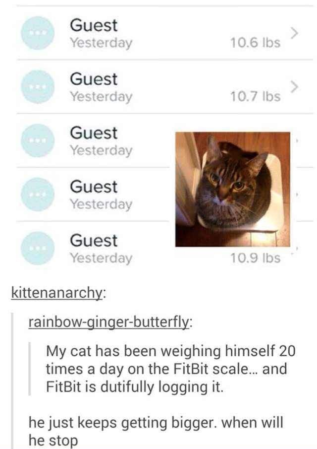 Text - Guest Yesterday 10.6 lbs Guest Yesterday <> 10.7 lbs Guest Yesterday Guest Yesterday Guest Yesterday 10.9 lbs kittenanarchy: rainbow-ginger-butterfly: My cat has been weighing himself 20 times a day on the FitBit scale.. and FitBit is dutifully logging it. he just keeps getting bigger. when will he stop