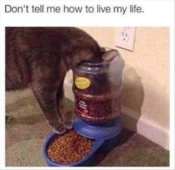 Pet food - Don't tell me how to live my life.