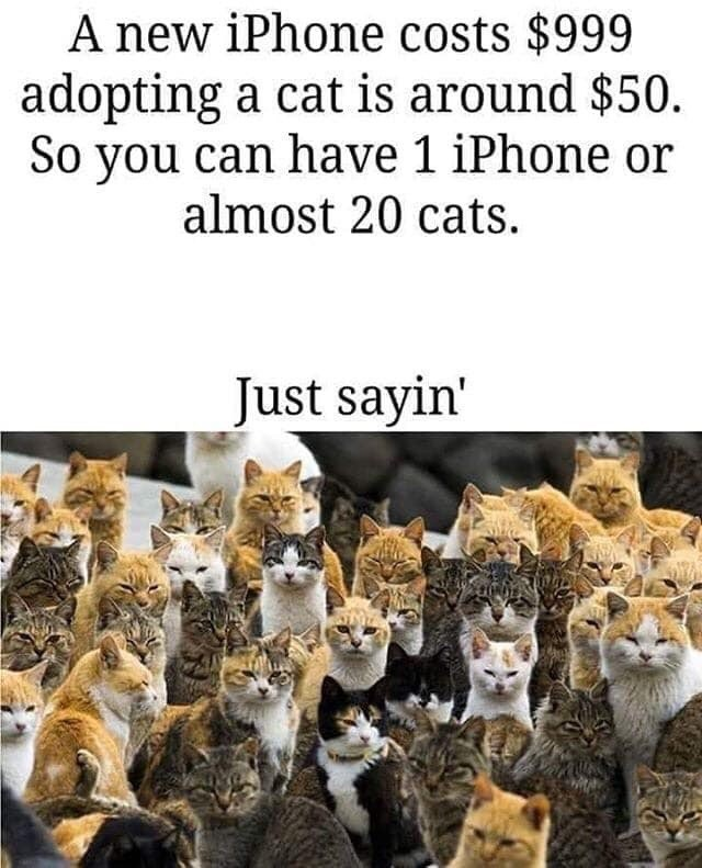 Cat - A new iPhone costs $999 adopting a cat is around $50. So you can have 1 iPhone or almost 20 cats. Just sayin'