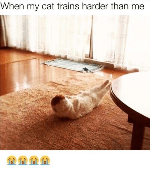 Floor - When my cat trains harder than me