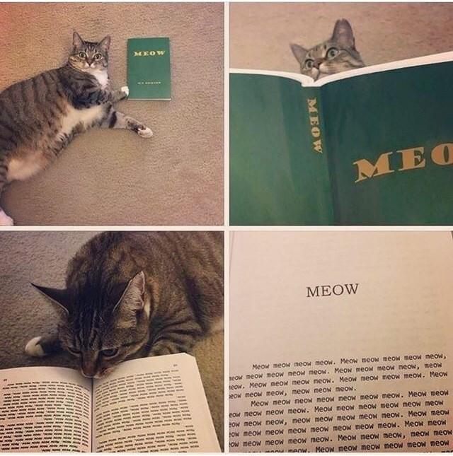 Cat - MEOW MEOW Meow meow neow meow. Meow meow meow meow meow, eow meow meow meow meow. Meow meow meow meow, meow eow. Meow meow meow meow. Meow meow meow meow. Meow eow meow meow, meow meow meow. Meow meow meow meow meow meow meow. MeoW meow eow meow meow meow. Meow meow meow meow meow meow POW meow meow, meowmeow meow meow meow. Meow meoW Ow meow meow meow meow meow meow meow. Meow meow Ow meow meow meow meow. Meow meow meow, meow meOW A menw. Meow meOW meow meow meow meow MEOW
