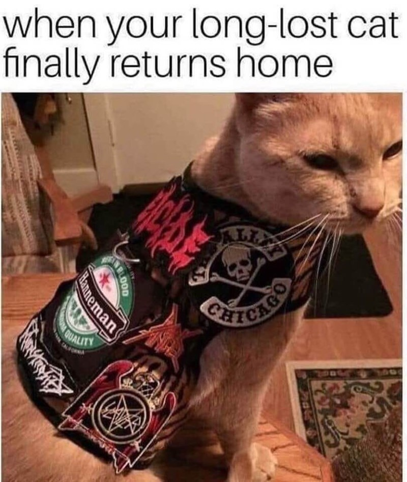 Cat - when your long-lost cat finally returns home CHECAO QUALITY TAFO Manneman