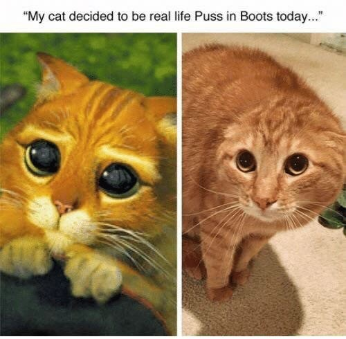 """Cat - """"My cat decided to be real life Puss in Boots today..."""""""