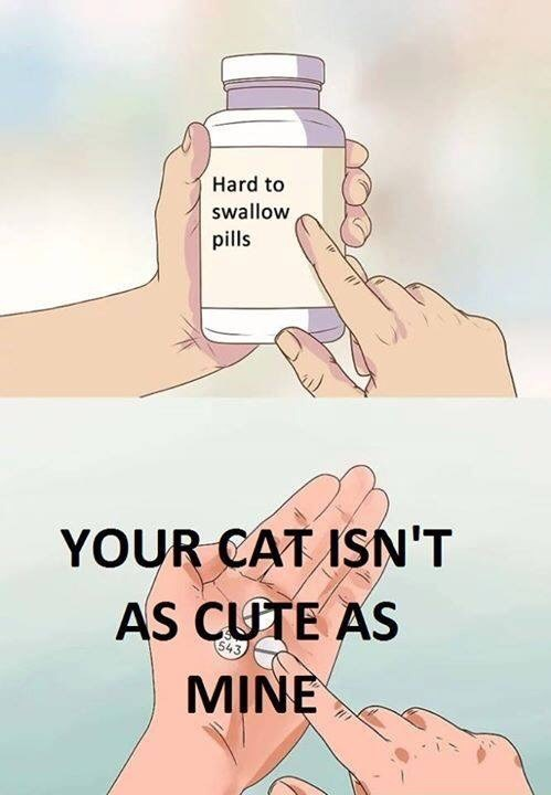 Skin - Hard to swallow pills YOUR CAT ISN'T AS CUTE AS MINE 543