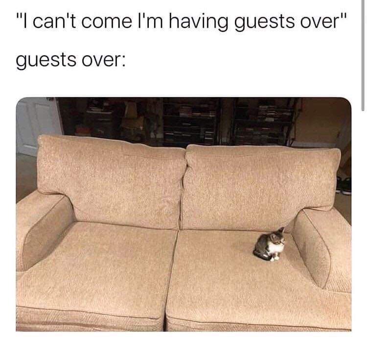 """Couch - """"I can't come l'm having guests over"""" guests over:"""