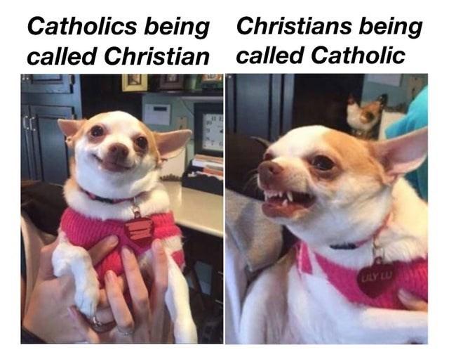 Dog - Catholics being called Christian Christians being called Catholic ULY LU