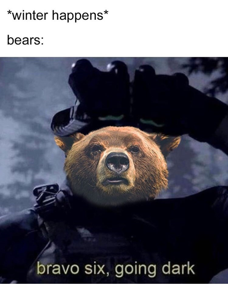 Bear - *winter happens* bears: bravo six, going dark