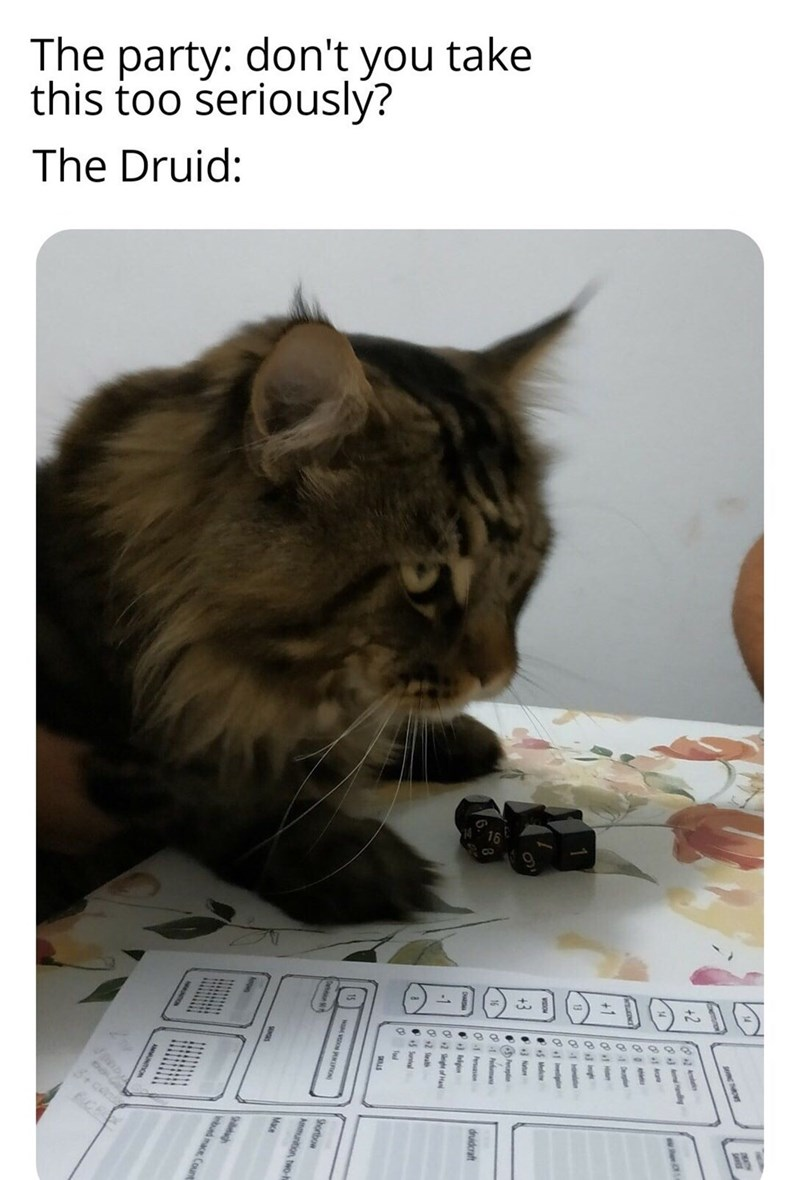 Cat - The party: don't you take this too seriously? The Druid: 3+ce eign Suntal Shortbow Ammunition, two-h Mace bued mace