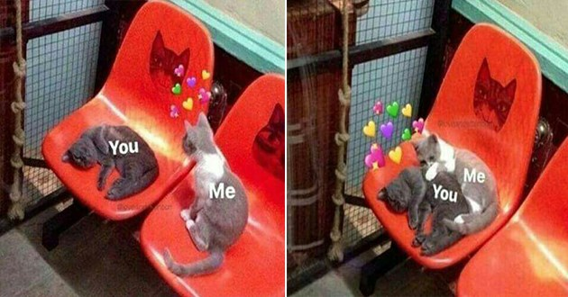 wholesome cute animals love