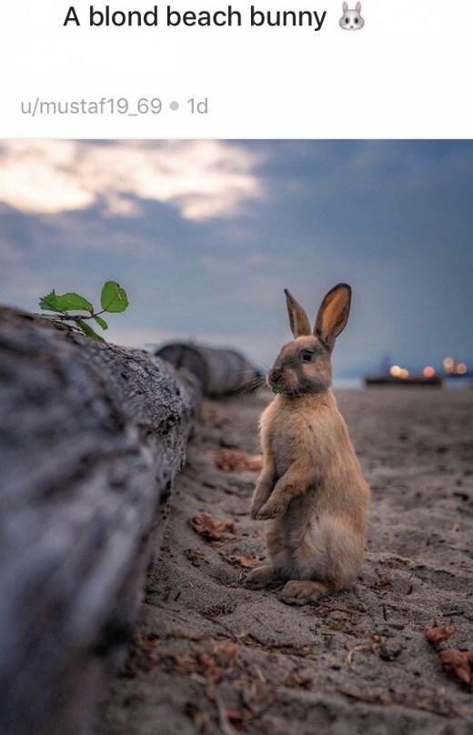 Hare - A blond beach bunny 8 u/mustaf19_69 1d