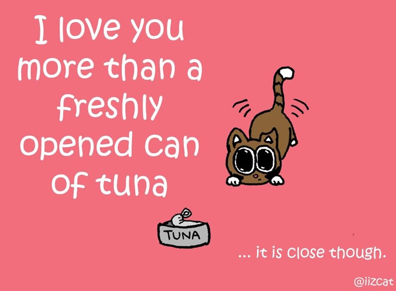 Text - I love you more than a freshly opened Can Of tuna TUNA .. it is close though. @iizcat