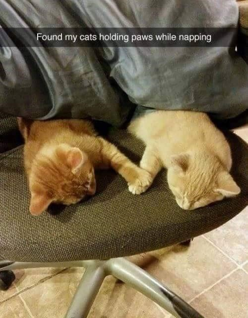 Cat - Found my cats holding paws while napping