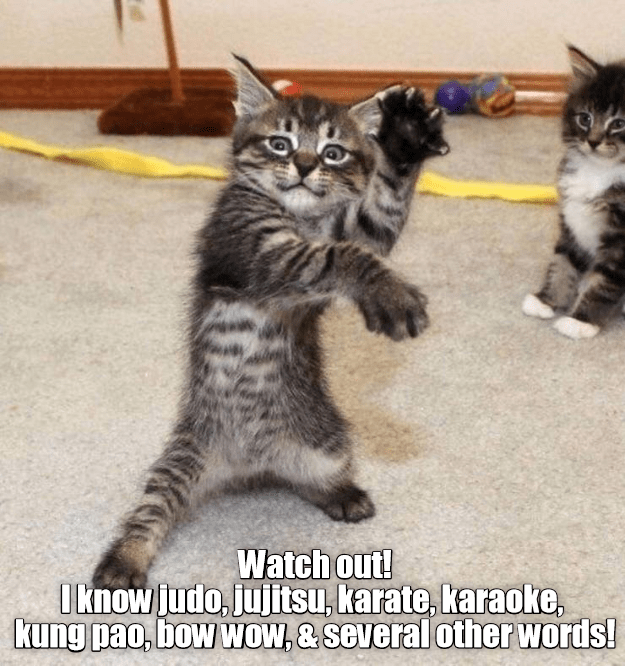 Cat - Watch outl Iknow judo, jujitsu, karate, karaoke, kung pao, bow WOW, & several other words!