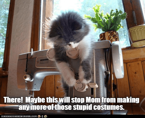 Cat - BOEE There! Maybe this will stop Mom from making rany more of those stupid costumes. ICANHASCHEEZBURGER.COM