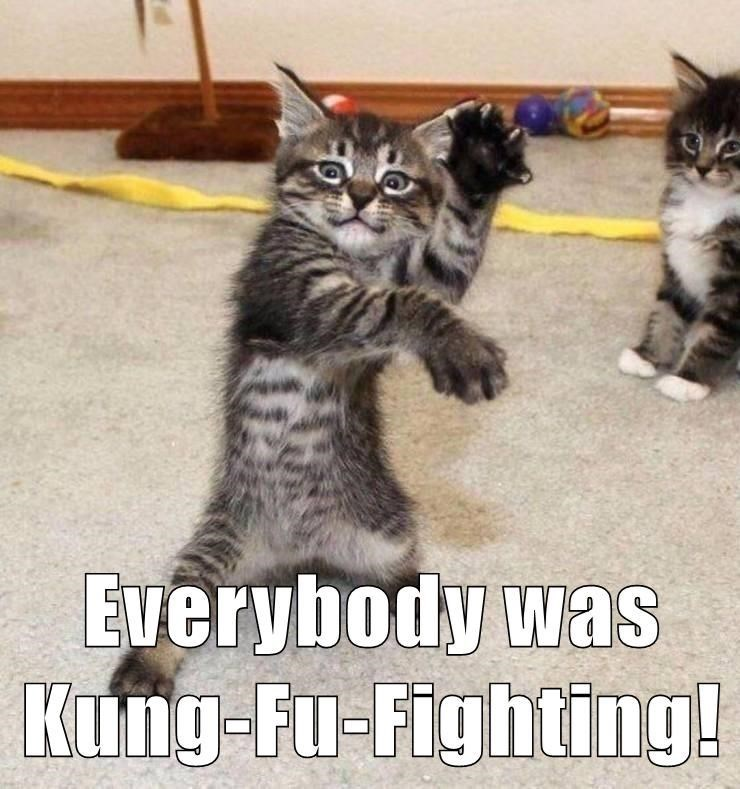 Cat - Everybody was Kung-Fu-Fighting!