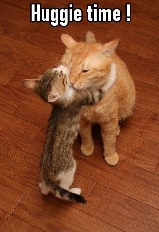 Cat - Huggie time !