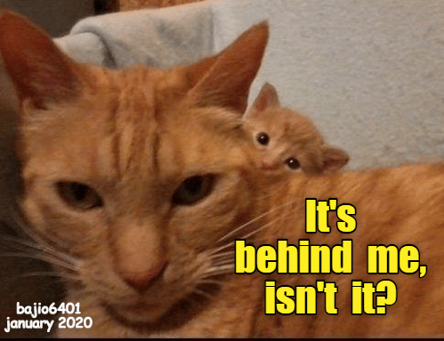 Cat - It's behind me, isn't it? bajio6401 january 2020
