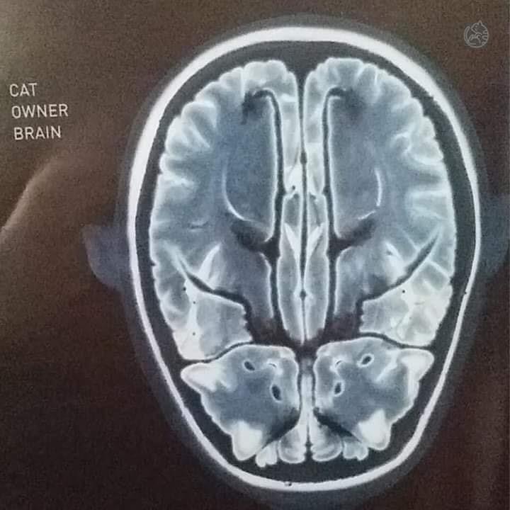 X-ray - CAT OWNER BRAIN