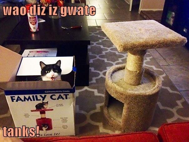 Cat - wao diz iz gwate LONE 1OTAN 16 Calitomia KCitty Condo FAMILY CAT Cat tanks! Eo Love LtI