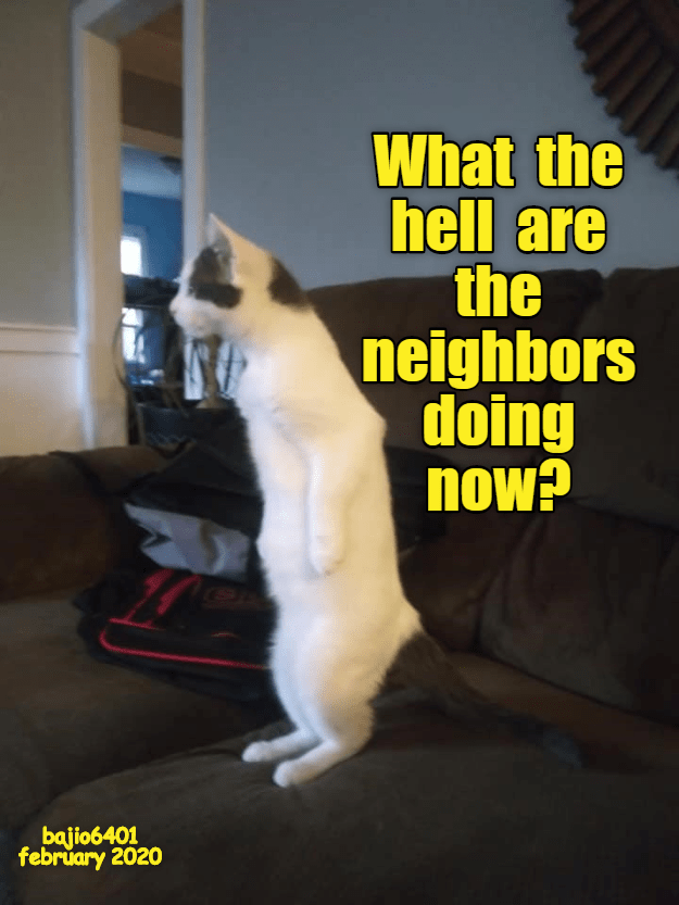 Cat - What the hell are the neighbors doing now? bajio6401 february 2020